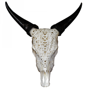 Gorgeous Bull Skull by Aureus Arts